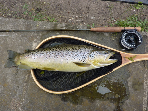 Witham trout and Orvis Superfine Trout Bum 1wt