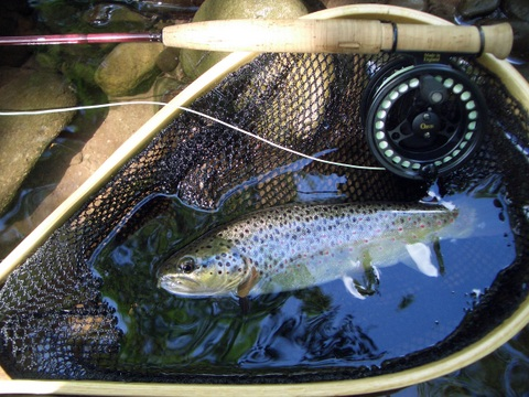 Honndu trout and Orvis Superfine 2wt