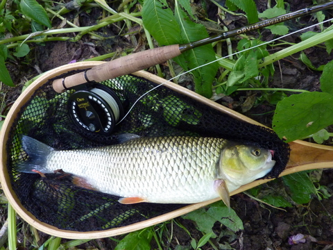 Rea Brook chub
