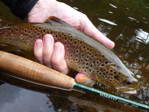 Usk trout