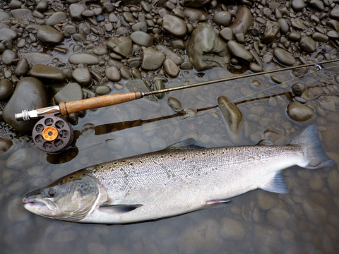 Salmon on Sunray line