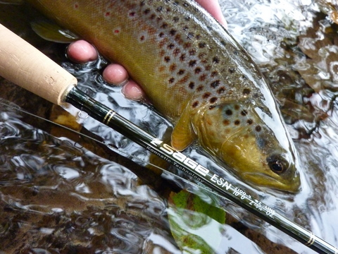 Trout and Sage ESN